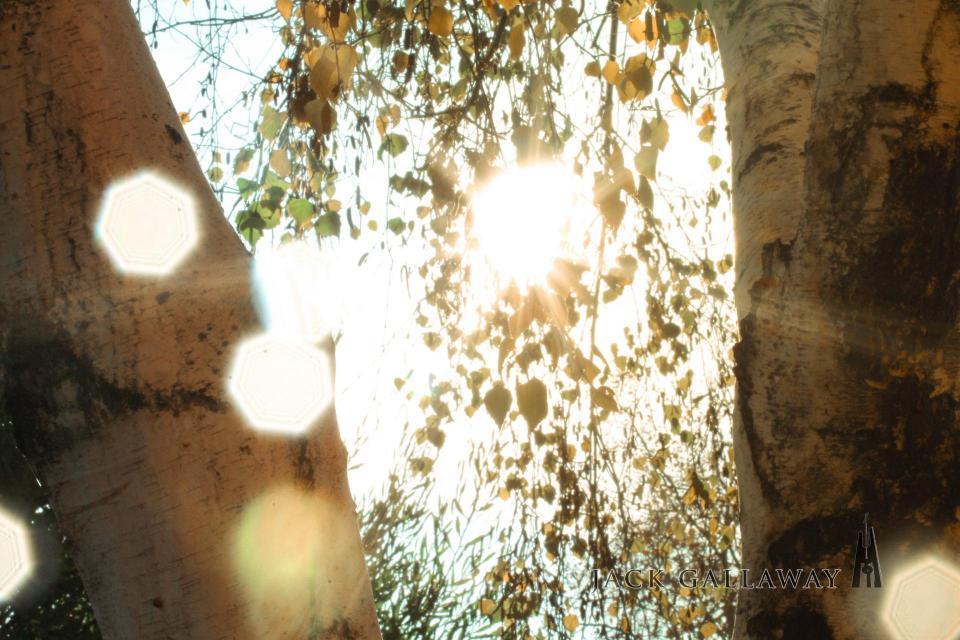 Image of light filtering through trees.